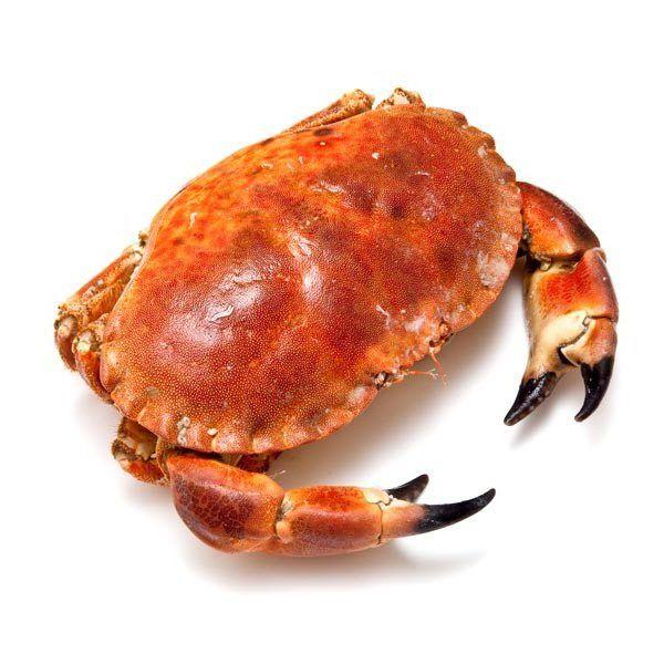Buey de mar cocido de calidad extra.