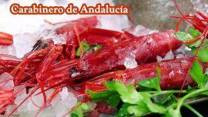 Comprar Carabinero de mar de Andalucía.