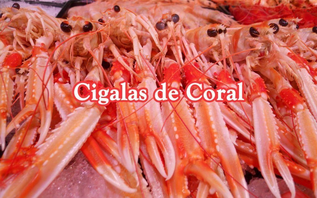 Cigalas de coral de mar.