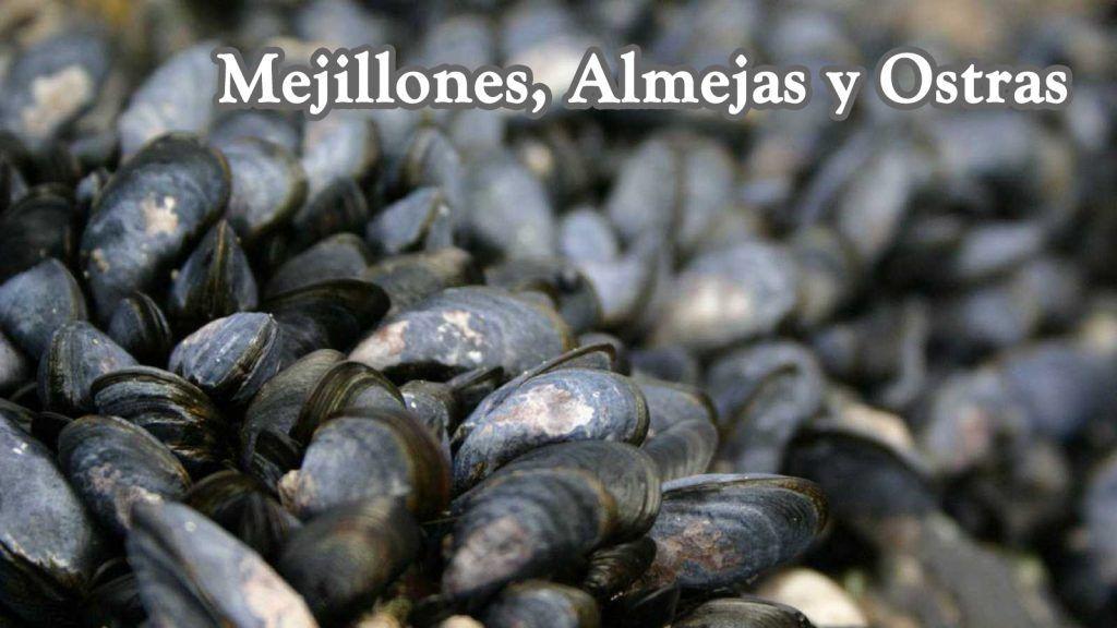 Donde comprar los mejores mejillones, Almejas y Ostras.