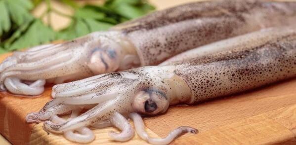 calamar - marisco nutrición y salud