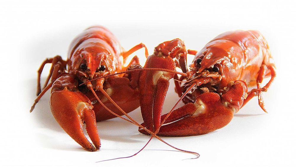 Propiedades nutricionales de lso crustaceos.