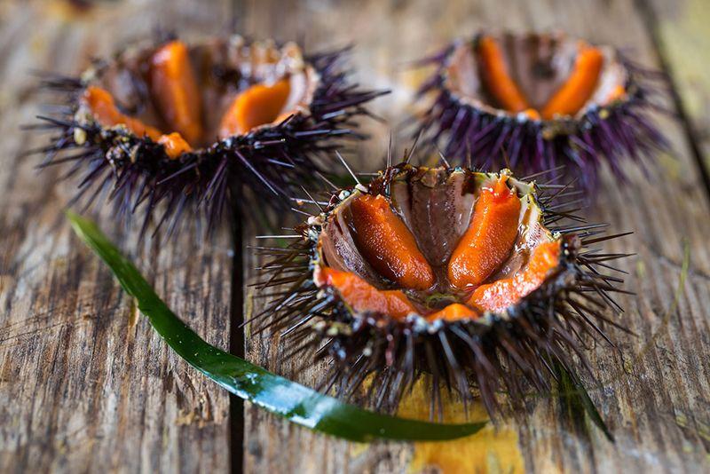 Donde comer marisco y erizos de mar en oviedo
