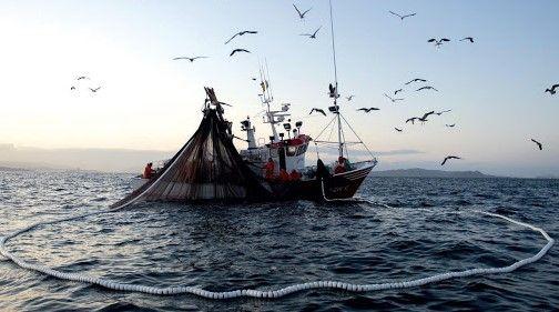 Pesca Cerco
