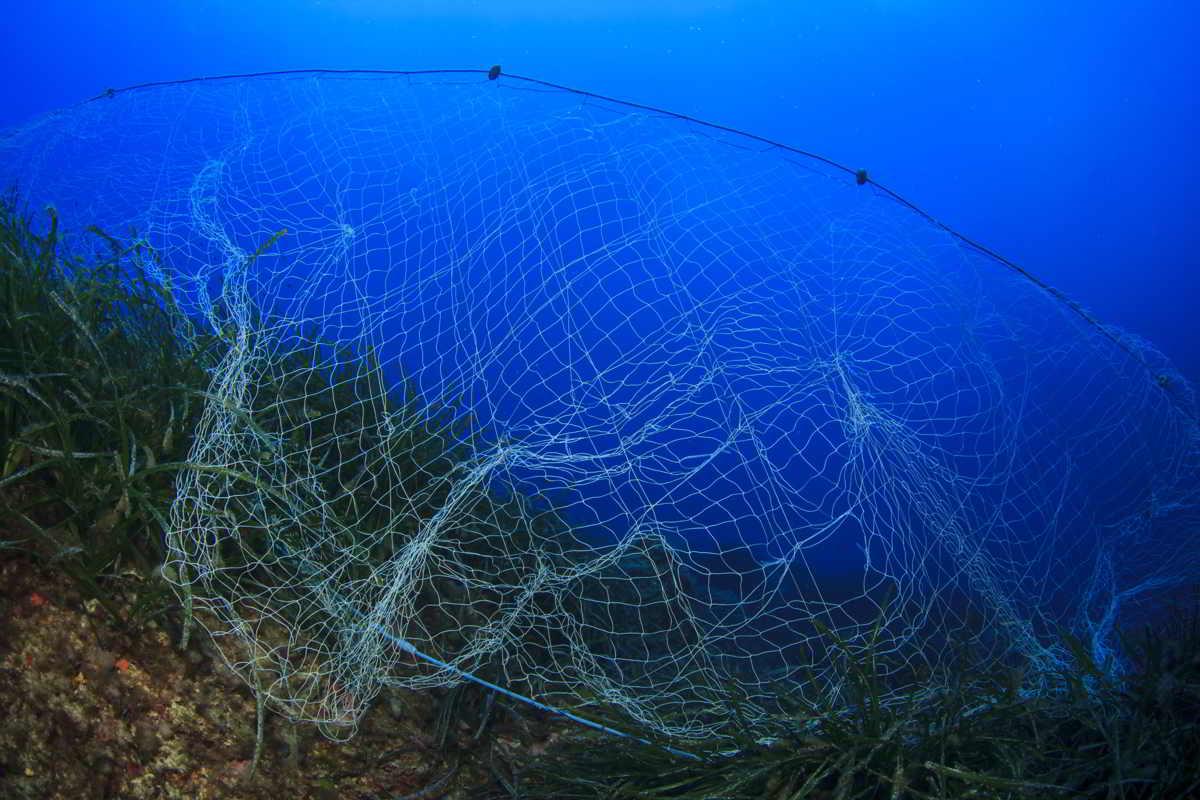 fondo marino redes