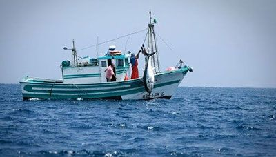 Pesca en Lonja de Cádiz