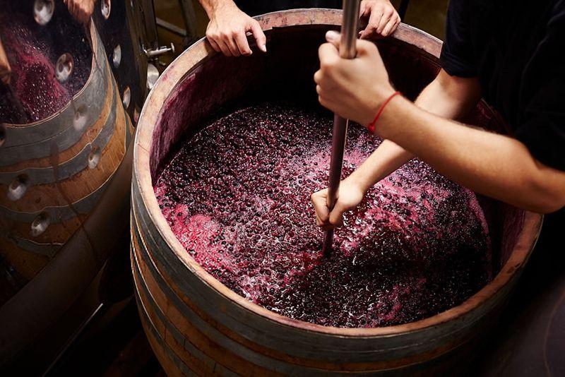 crianza tradicional del vino