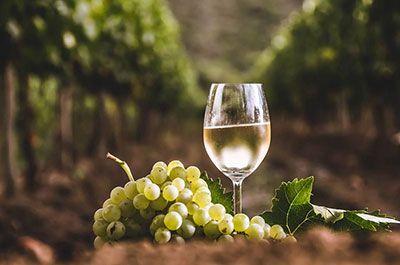 vino blanco en viña