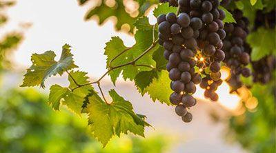 vinos de andalucia